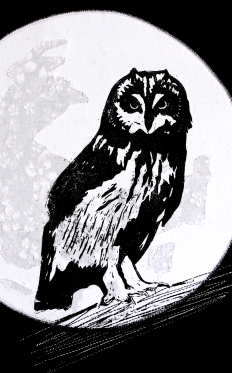 new owl logo3businesscard2